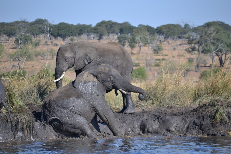 Chobe Day Trip - Sunset Cruise