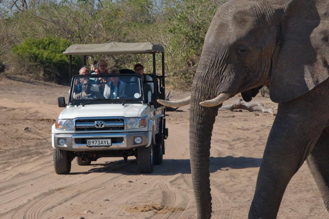 Chobe Day Trip - Game Drive