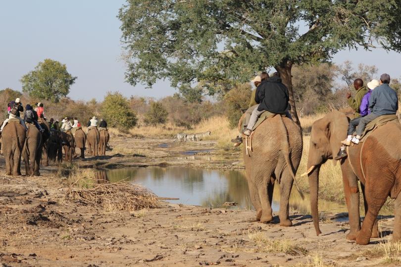 Elephant Back Safari